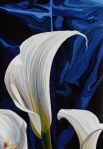 Calla Lillies #1