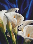 Calla Lillies #2